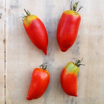 Tomata del pebre